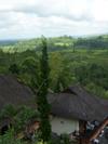 Bali033tn.jpg