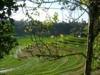 Bali073.jpg