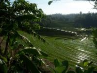 Bali075.jpg